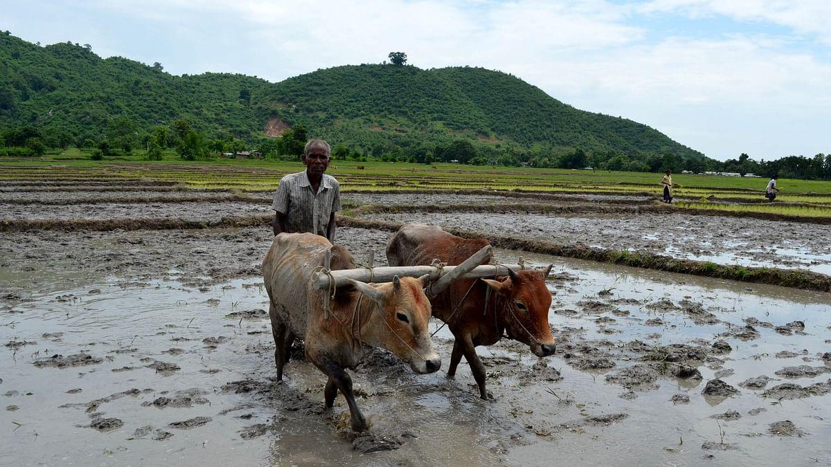 खेत में हल चलाता किसान. (फोटो: IANS)