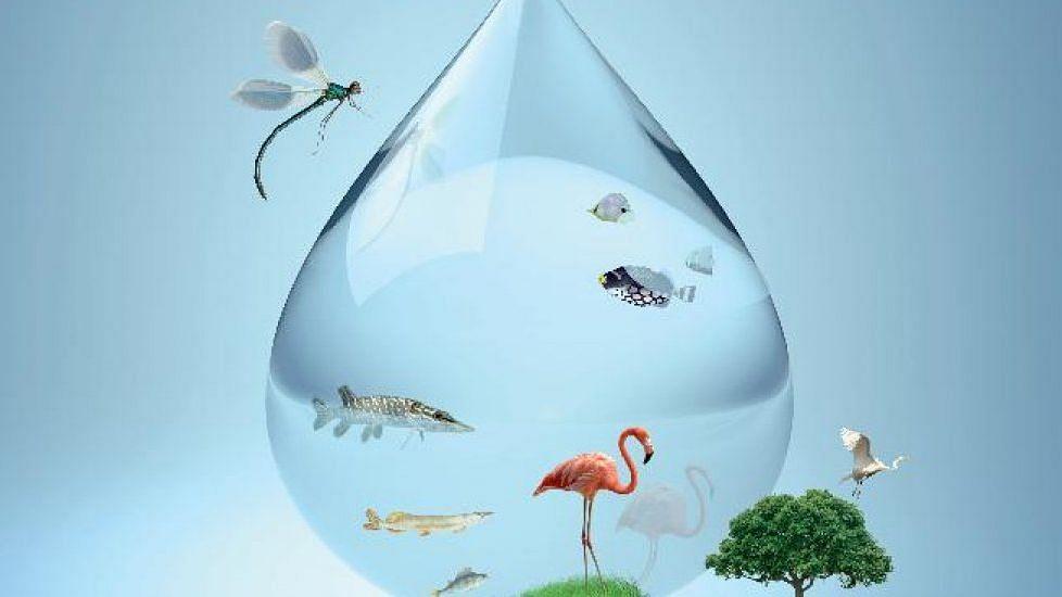 प्राकृतिक आपदाओं से बचाव का जरिया हैं वेटलैंड्स