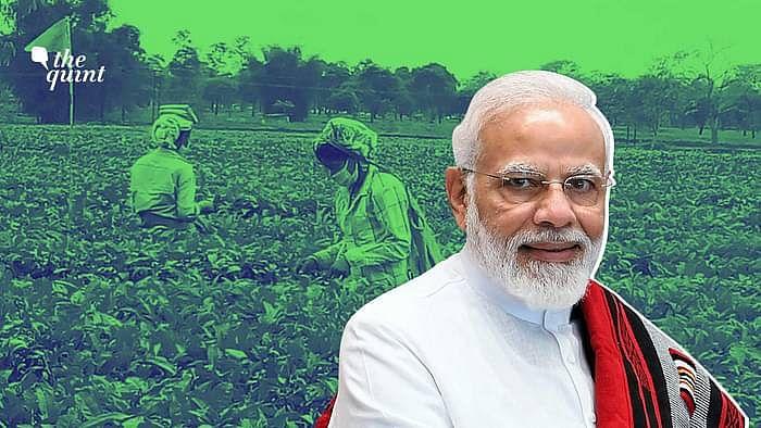 भारतीय चाय नहीं, 'भारतीय चाय मजदूरों' को है असली खतरा