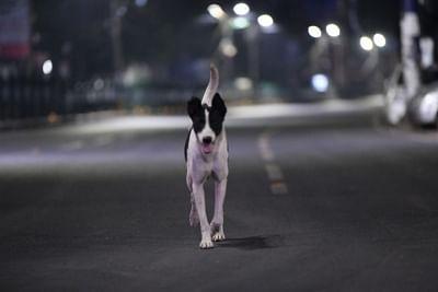 बेंगलुरु में आवारा कुत्तों ने बेसहारा महिला को मार डाला