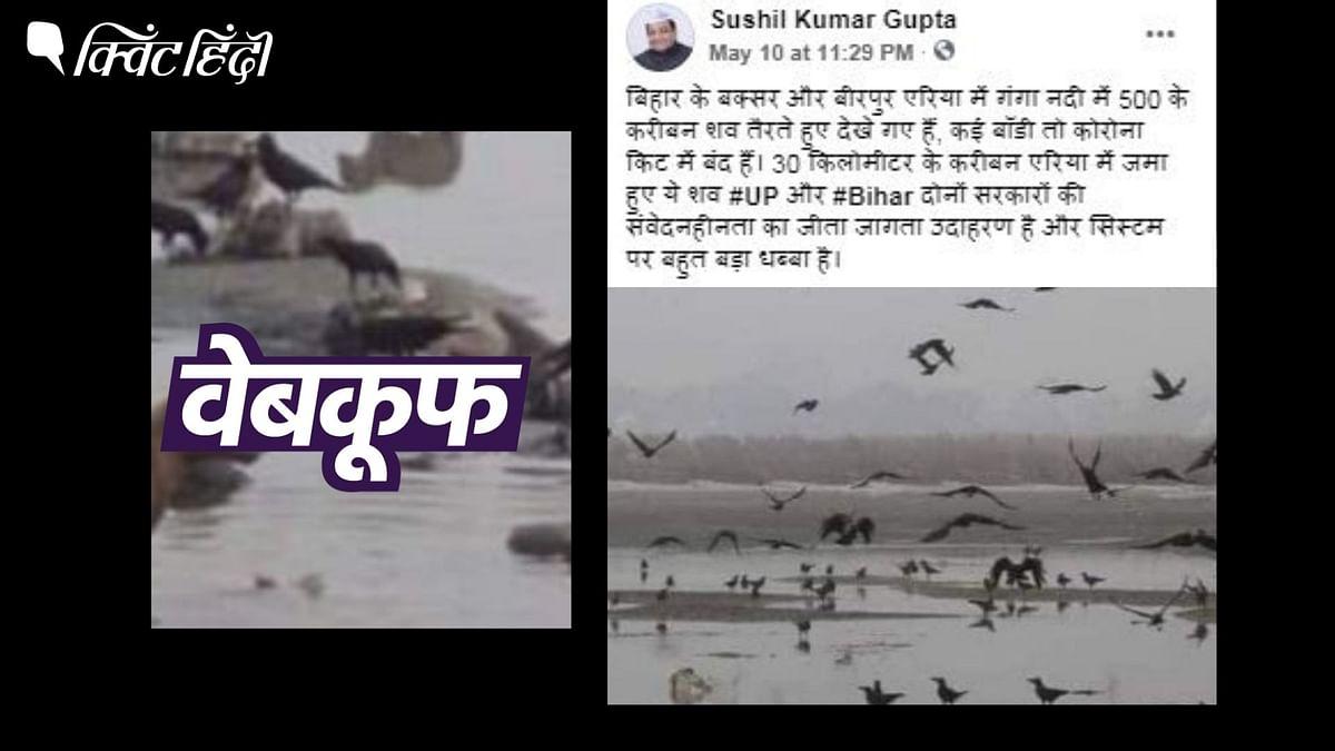 नदी में तैरती लाशों की पुरानी तस्वीरें कोरोनाकाल की बताकर  वायरल