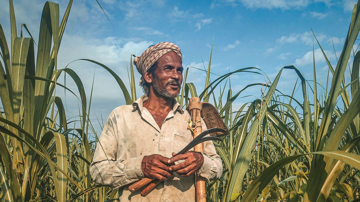 असम: महामारी और बाढ़ से त्रस्त गन्ना किसान, सरकार नहीं कर रही कोई समाधान