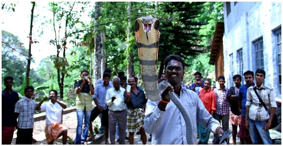 Apologise or Will Stop Catching Snakes, Says Snake Catcher From Kerala