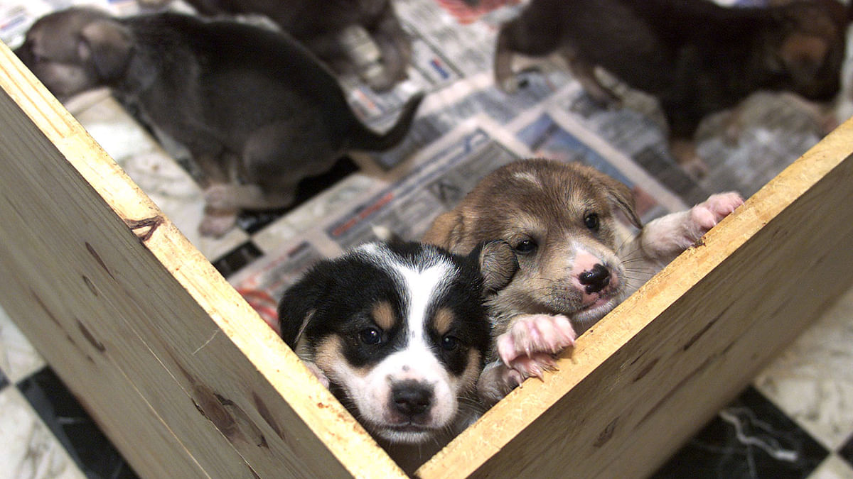 Stray dogs up for adoption. (Photo: Reuters)