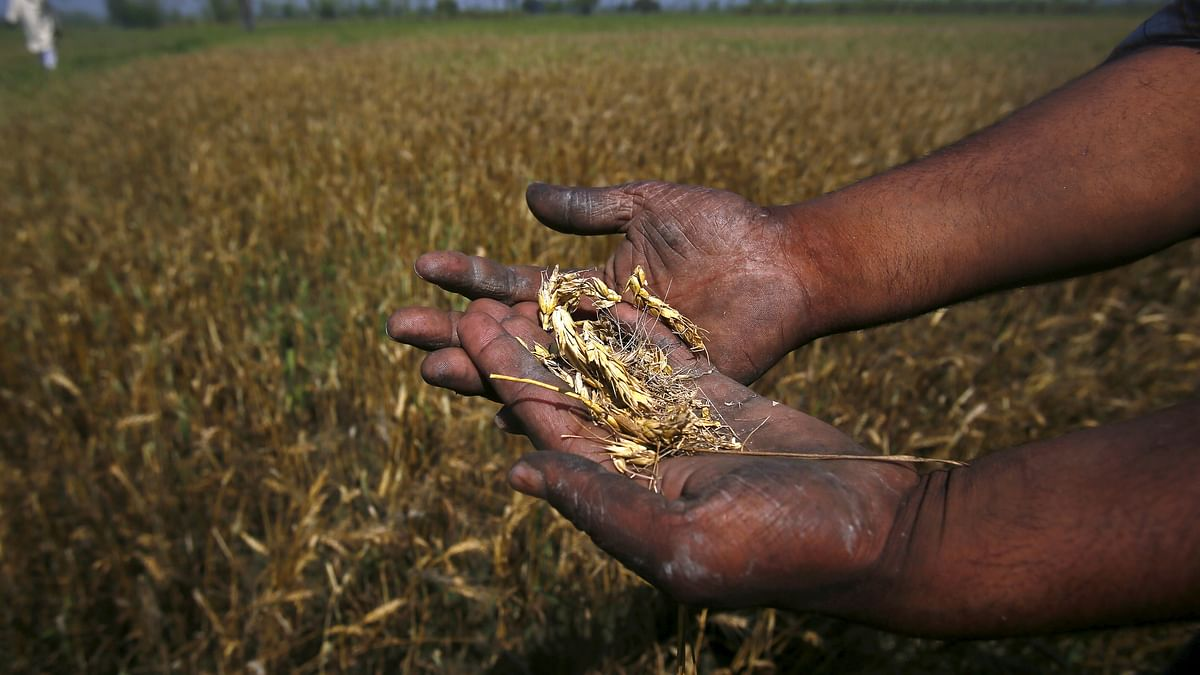 Corona Lockdown: No Labour to Harvest Crops, UP Farmer Ends Life