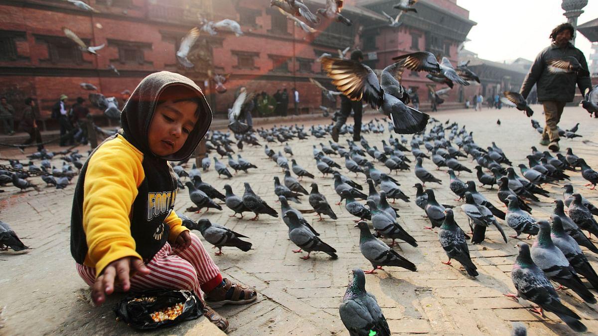 A child feeds pigeons at Patan Durbar Square in Kathmandu. (Photo: Reuters)