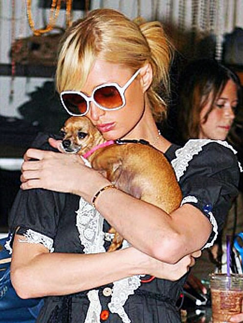 """An adorable picture of Paris Hilton holding her Tinkerbell (Photo: <a href=""""https://instagram.com/parishilton/"""">Instagram/parishilton</a>)"""