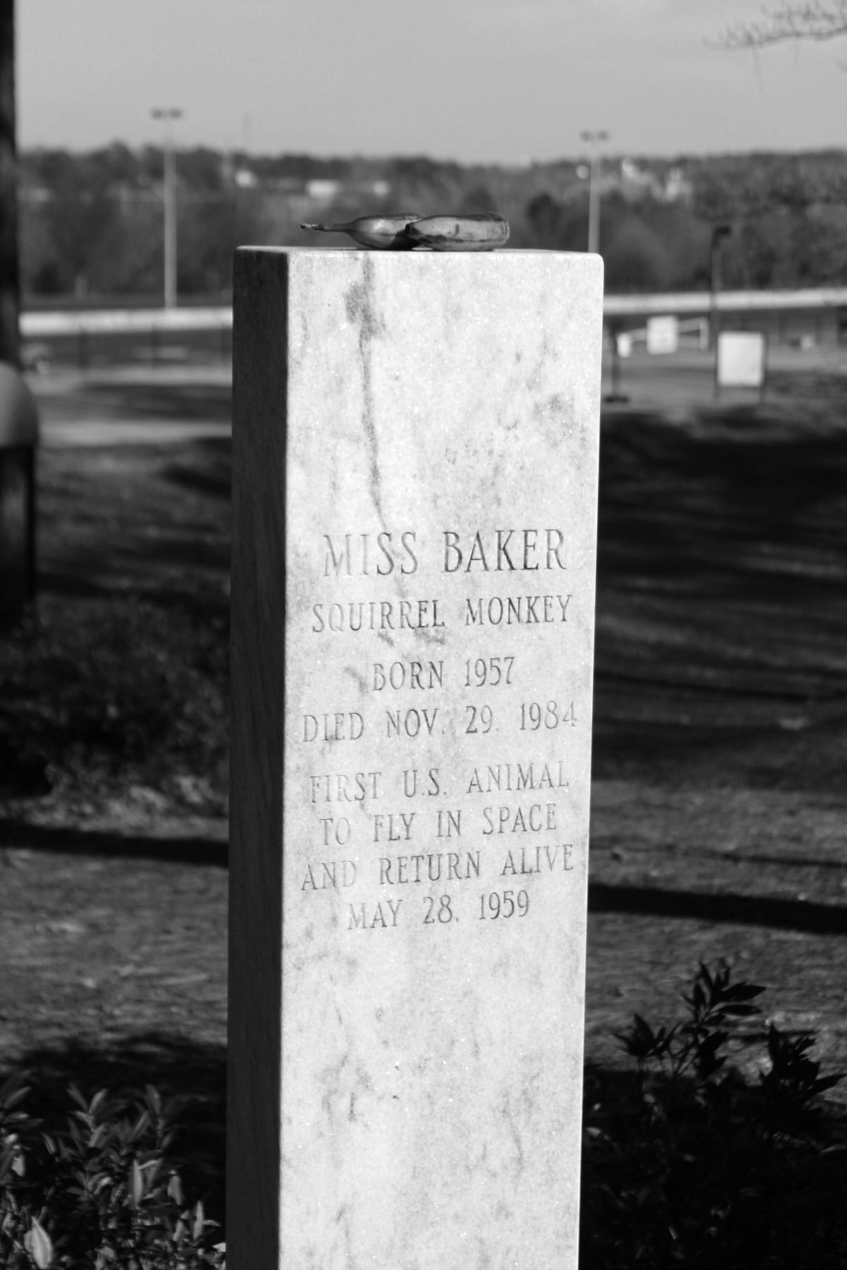 Miss Baker's gravestone frequently has bananas on top left by visitors. (Photo Courtesy: Wikimedia Commons)