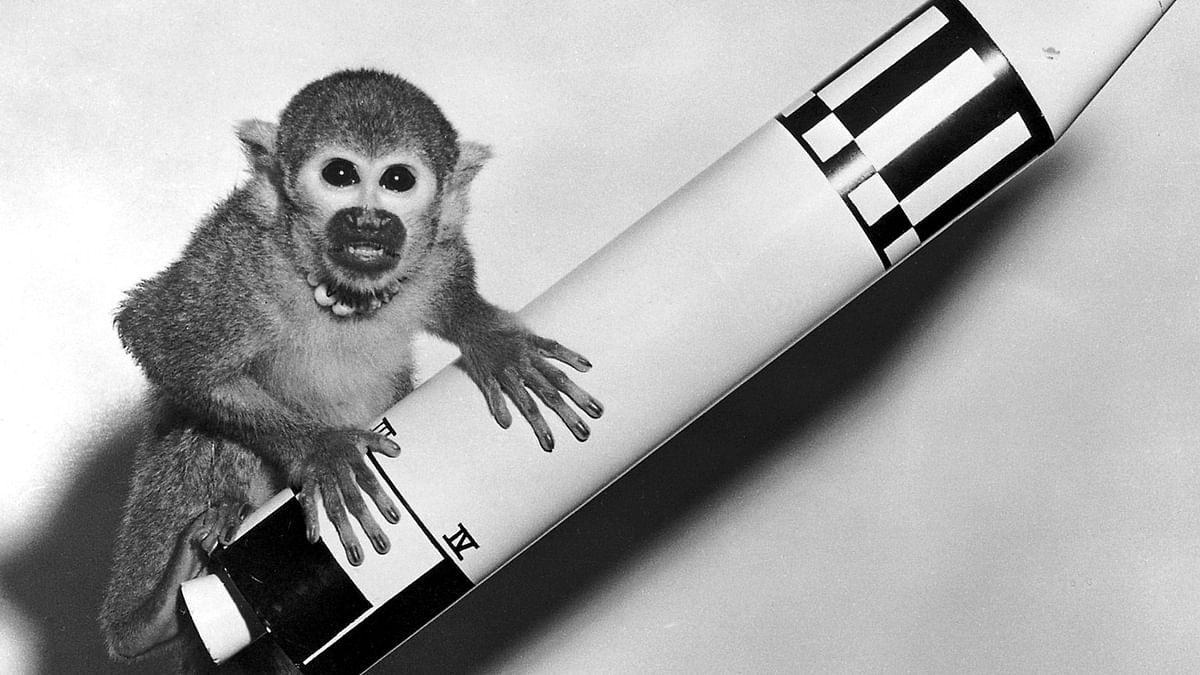 Baker, a squirrel monkey  rode a Jupiter IRBM into space and back on May 28, 1959. (Photo Courtesy: Wikimedia Commons)