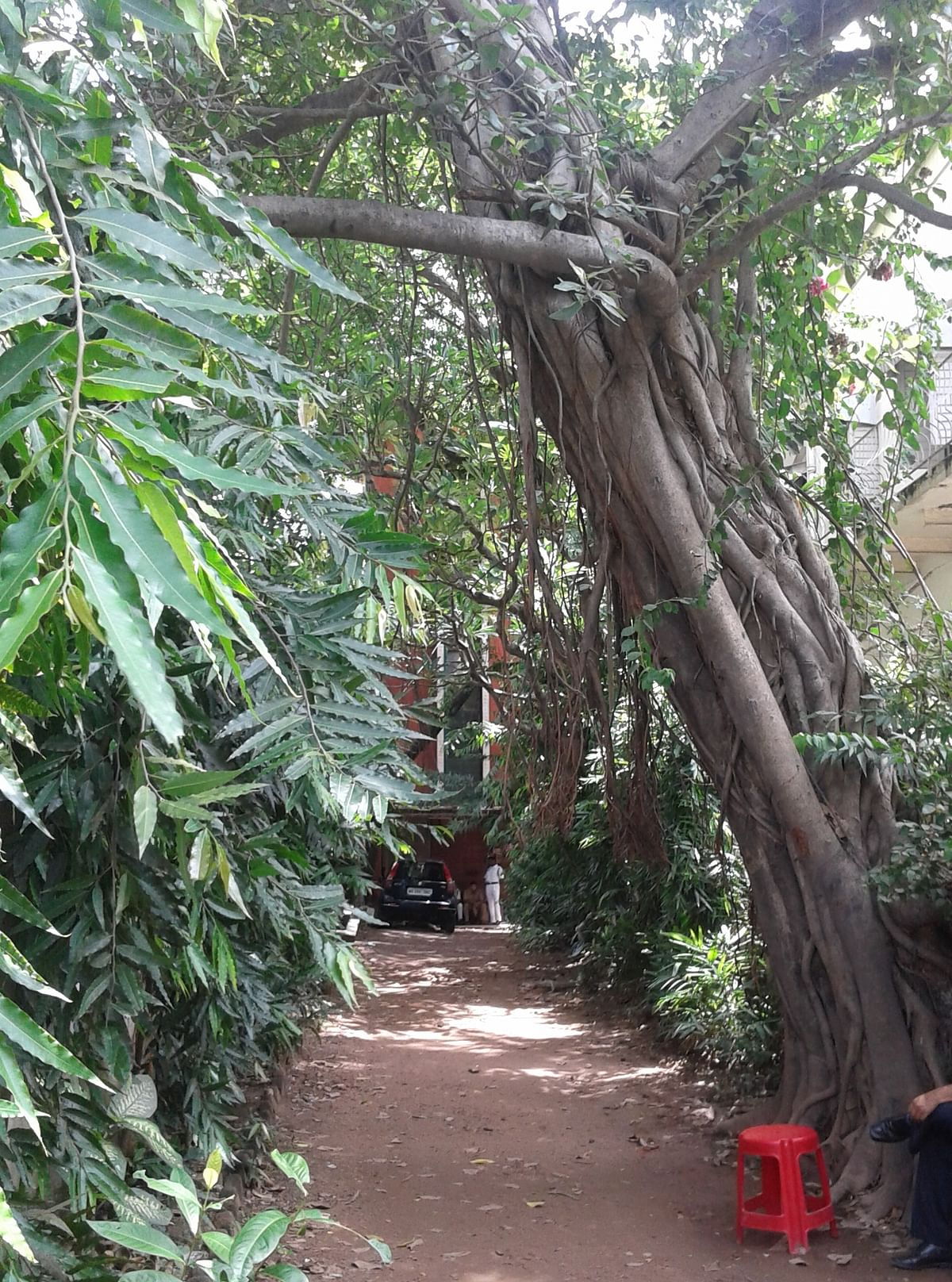 The pathway leading to the house. (Photo: Payal Mohanka)