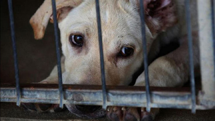 A Dog in a cage. Image used for representation only