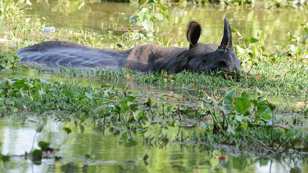 A rhinoceros in Kaziranga. (Photo: Anjana Dutt)