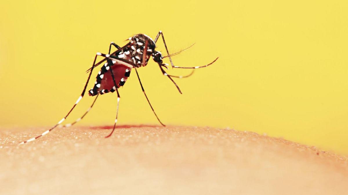 The saliva test basically works like other blood-based malaria rapid diagnostic tests.