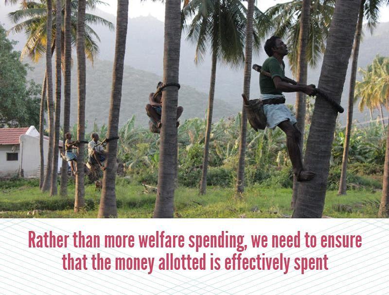 Coconut plucking in Coimbatore.(Photo credit: Vivian Fernandes)