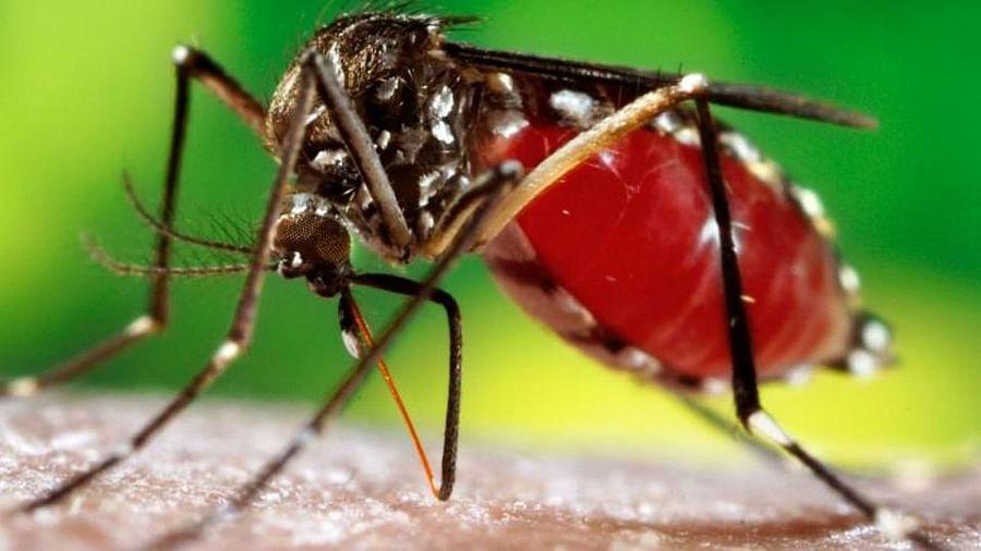 Dengue has gripped Kolkata.