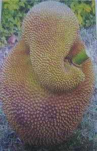 "Ganesha in a jackfruit (Photo: <a href=""https://ruchii.wordpress.com/2006/08/25/happy-ganesha-chathurthi/"">ruchii.wordpress.com</a>)"