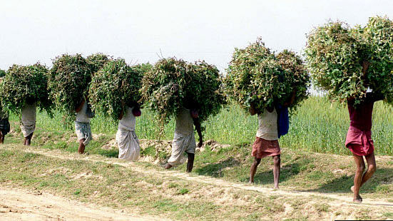 Close to half of Bihar's young people depend on farming for a living. (Photo: Reuters)