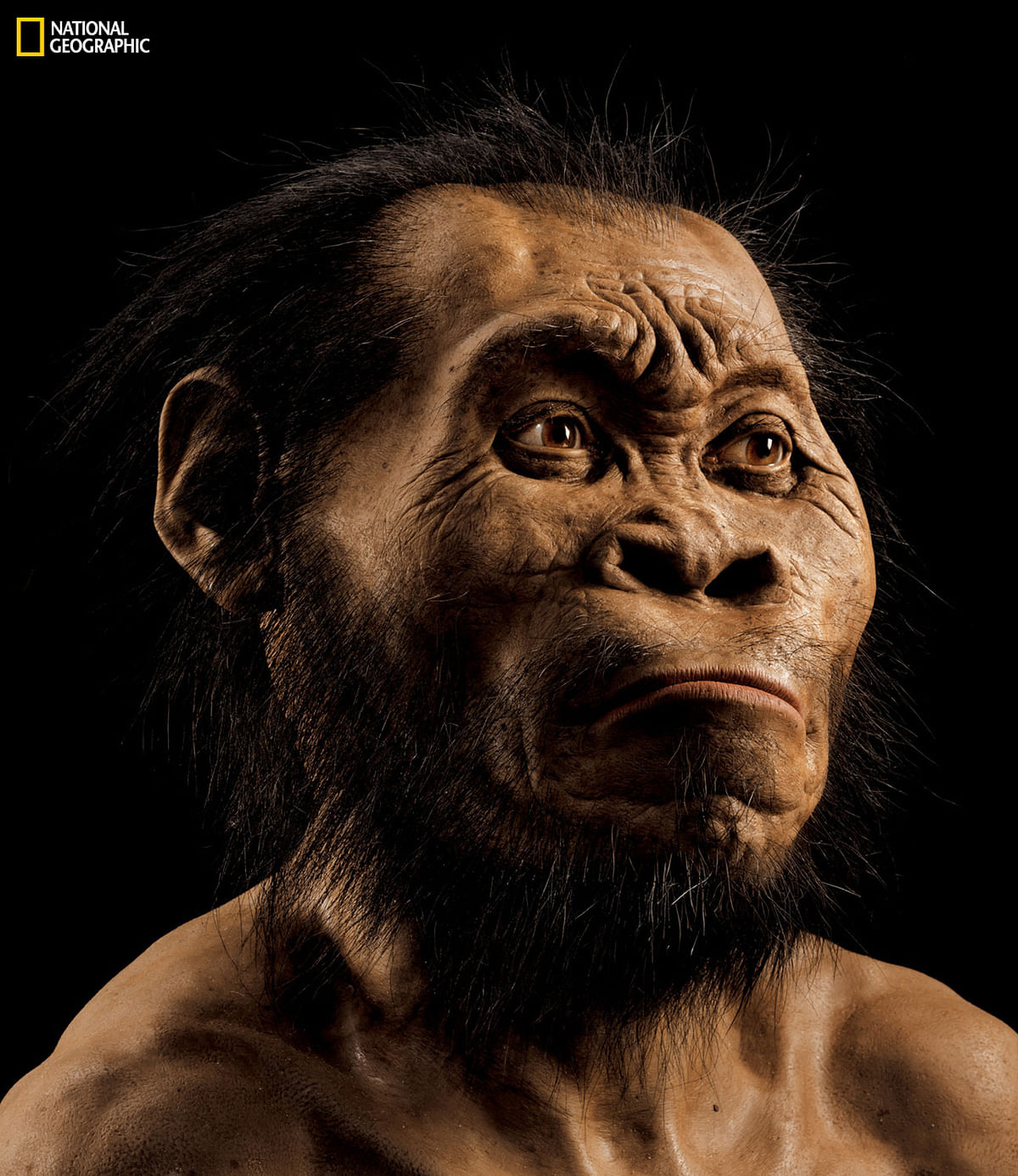 A reconstruction of Homo naledi  by paleoartist John Gurche at his studio in Trumansburg, N.Y. (Photo: (Mark Thiessen/National Geographic via AP)