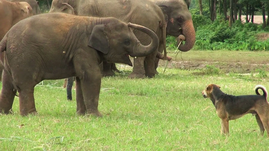 An excitable dog plays a game of chase with a baby elephant. Representational image.