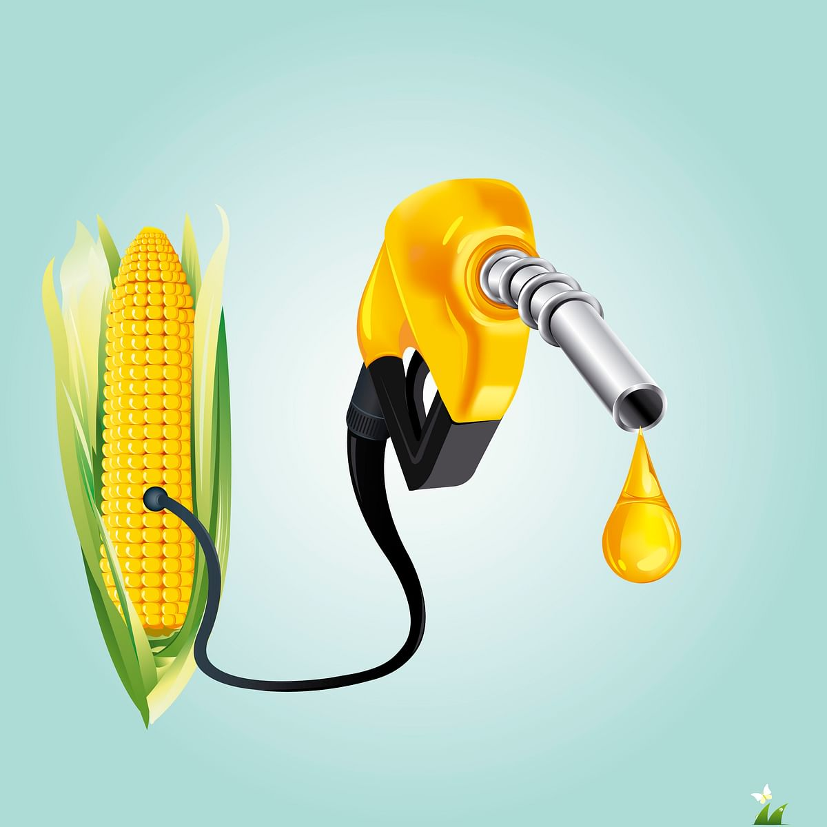 Most of the ethanol produced currently comes from sugarcane. (Photo: iStockphoto)