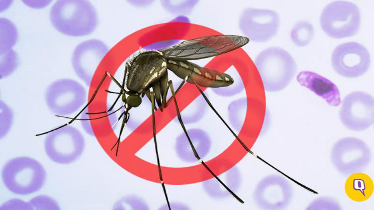 Rising Malaria Cases Requires Quick Action Globally: UN
