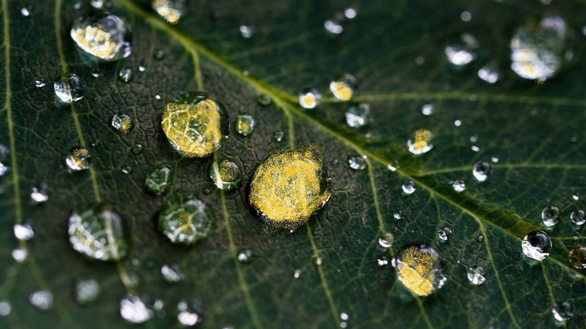 The Meppady region of Wayanad district received yellow-coloured rain on Friday.(Photo Courtesy: The News Minute)
