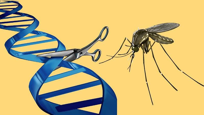 Right now, gene engineering might be the sole solution to the malaria problem, but if proved successful, the same method could also work in other mosquito species (Photo: iStock altered by The Quint)