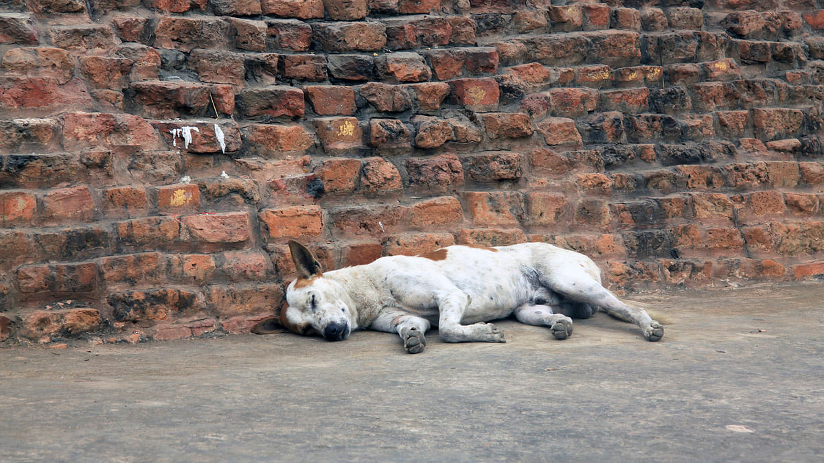 Hyderabad Municipal Corporation Spent Rs 5,000 Per Dog, Shows RTI