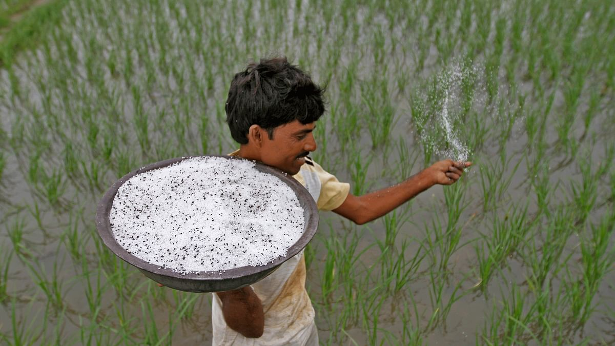 A farmer spreads pesticide in his paddy field. (Photo: Reuters)