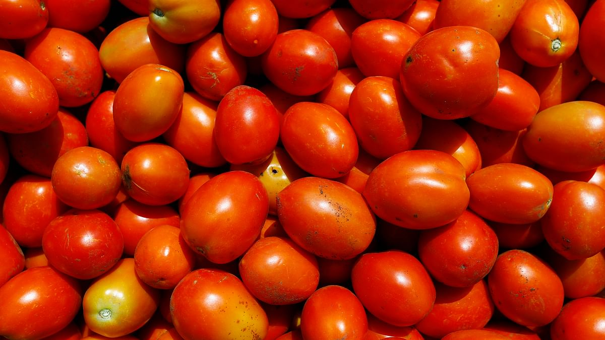 Buying tomatoes will now be a costly affair. (Photo: Reuters)