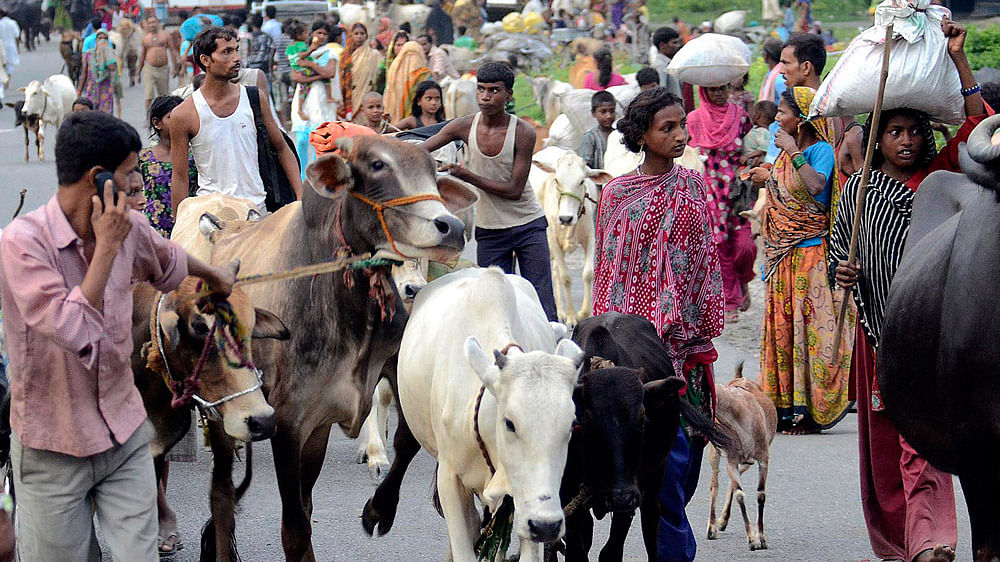 Villagers move with their belongings and cattle to relief camps in  Supaul district in  Bihar, August 3, 2014. (Photo: Reuters)