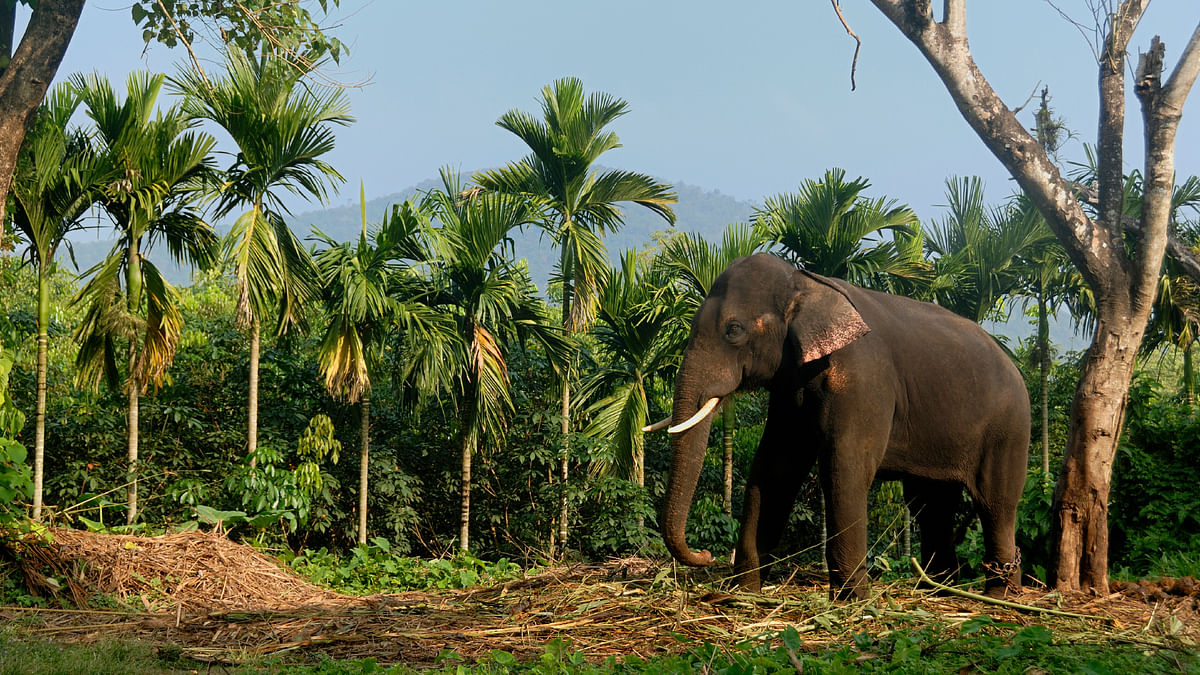 270 Elephant Deaths in Kerala, Says Animal Rights Campaigner