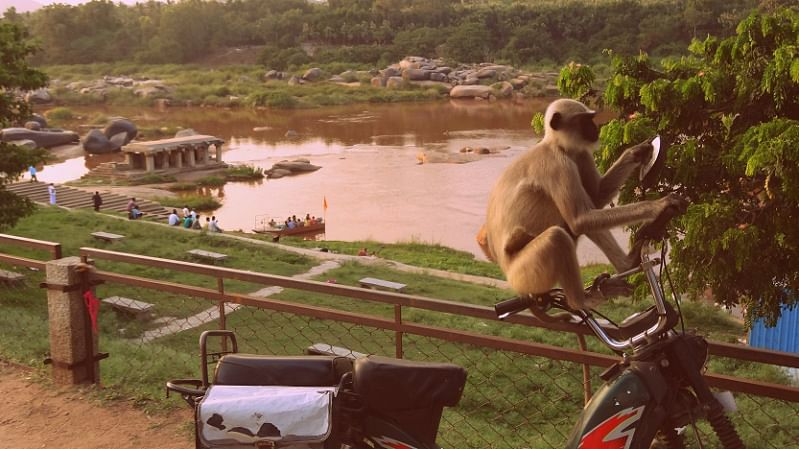 This monkey was totally checking himself out! (Photo Courtesy: Sonal Kwatra Paladini/Drifter Planet)