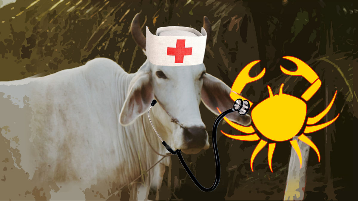 A hospital in Gujarat is hoping to use cowpathy to cure cancer. (Photo: <b>The Quint</b>)