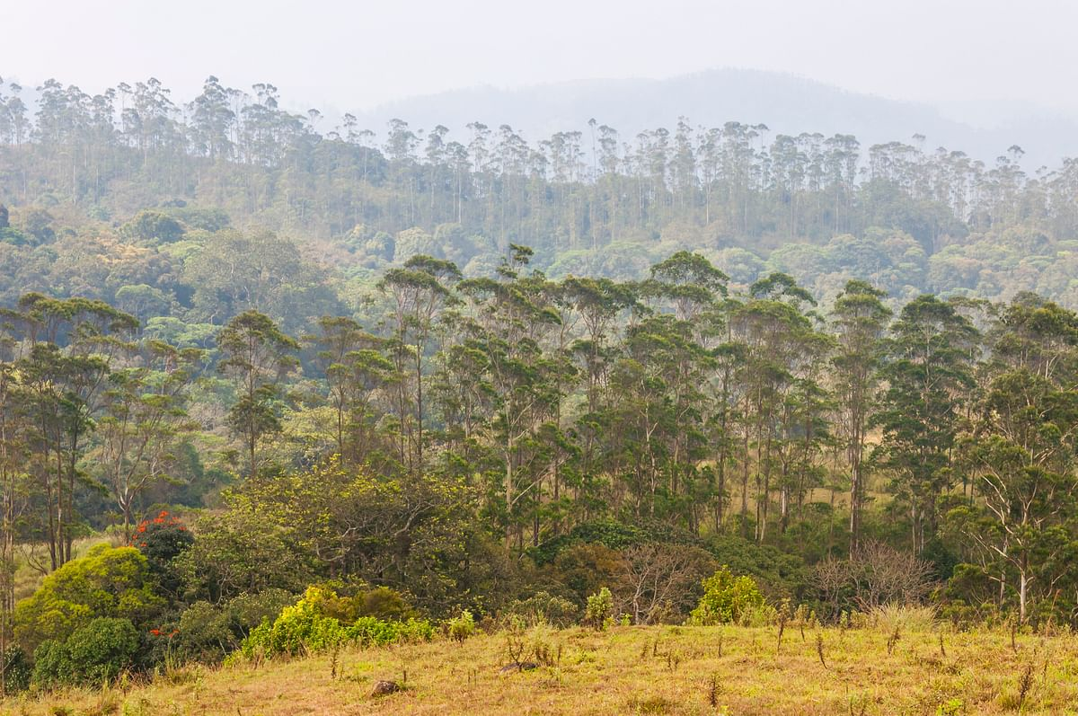 India's total forest cover has gone up. (Photo: iStockphoto)