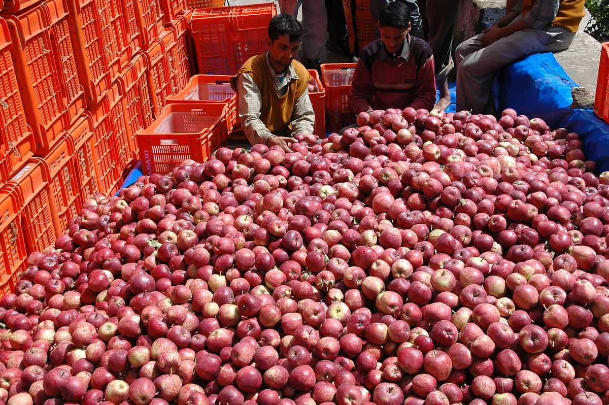 Shimla district alone accounts for 80 percent of the total apple production (Photo: Reuters)