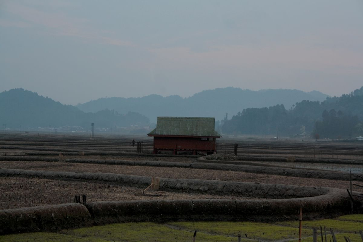 Among the paddy fields, in gloriously dim light. (Photo Courtesy: Kushal Chowdhury)