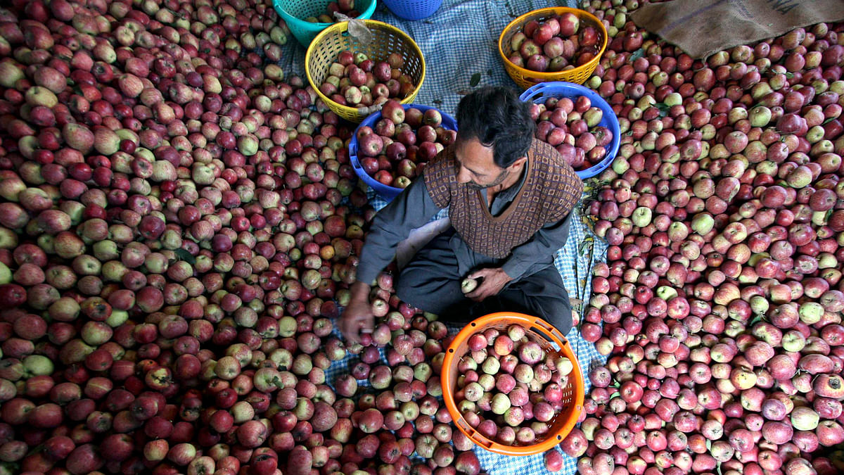 The prolonged dry winter spell may hit the Rs 3,500 crore ($520 million) fruit economy of Himachal Pradesh, horticulture experts say.(Photo: Reuters)