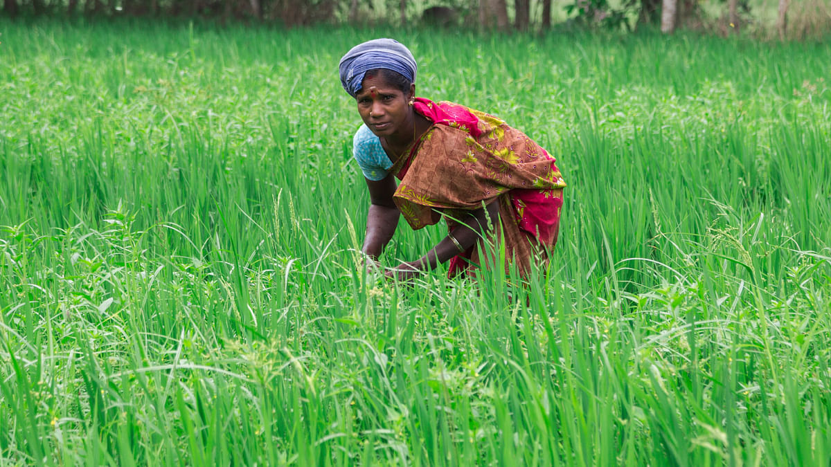 In 2004, Kerala allowed self-help groups of four to ten women to lease land up to 12.35 acres under tripartite agreements between themselves, the owners and the local panchayats. (Photo: iStockphoto)