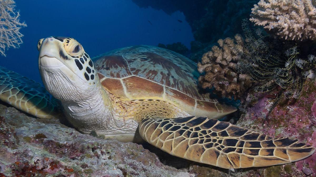 Adani's Australian Coal-Mining Bid: Coral Reefs to Go up in Soot?