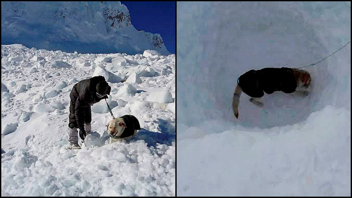 Dot and Misha, two canines who were part of the Siachen avalanche rescue team. (Photo: PTI)