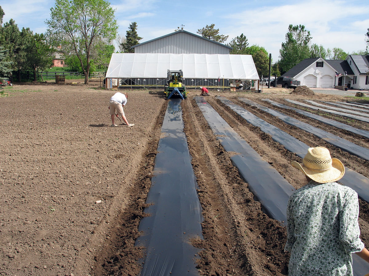 Workers in Colorado's Table Mountain Farm prepare new growing beds. When mature, the flowers and edibles will be sold directly from the field for processing or to be eaten raw by people who live nearby. Photo Courtesy: AP)