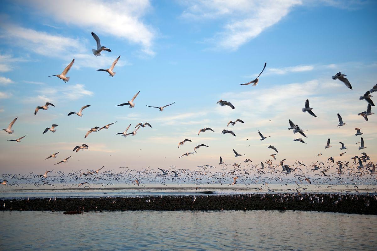 Sunset Seagulls. (Photo: iStockphoto)