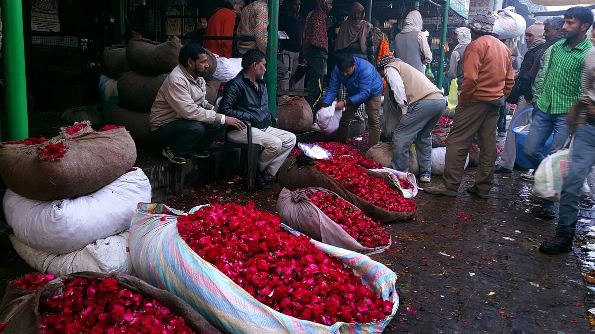 Roses from Delhi can survive warm weather. (Photo: Prashant Chahal/<b>The Quint</b>)