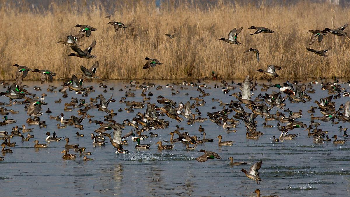 Kashmir's Bird Migration at Risk? State Starts Second Census