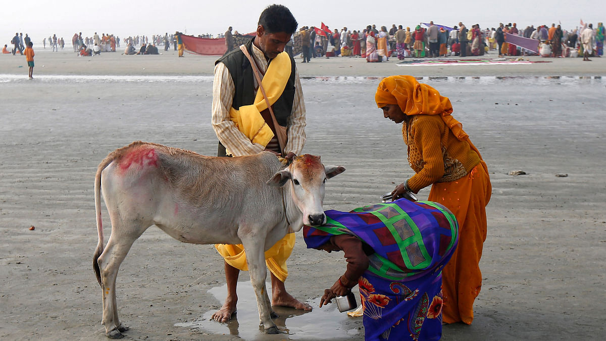 The impact of the beef ban can be seen in the plight of desperate farmers and the economy. (Photo: Reuters)