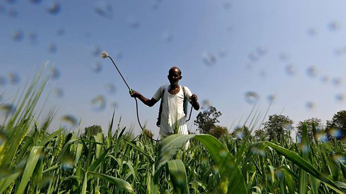 A farmer sprays a mixture of fertilizer and pesticide onto his wheat crop. Image used for representation.
