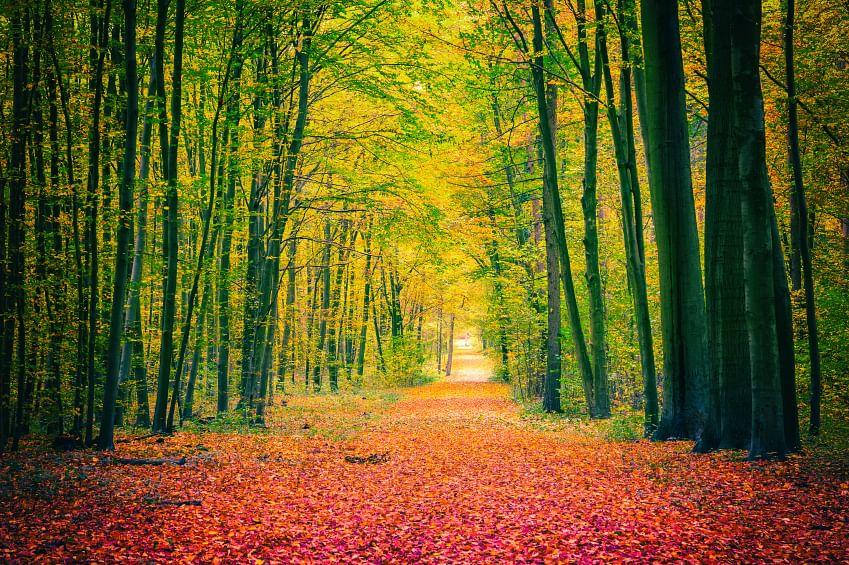 Autumn park. (Photo: iStockphoto)