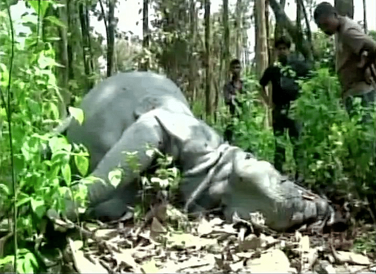 Rhino was found killed by poachers in Kaziranga National Park within 12 hours of 'Will-Kat' visited the wildlife reserve. (Photo Courtesy: ANI)