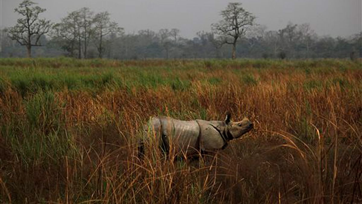 The endangered one- horned rhino ( Photo : AP )